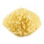Eponge de mer Honeycomb